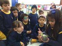 """Alunos da Educação Infantil desenvolvem o projeto """"Germinação de Sementes""""."""